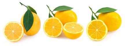 Citron på vit royaltyfri bild
