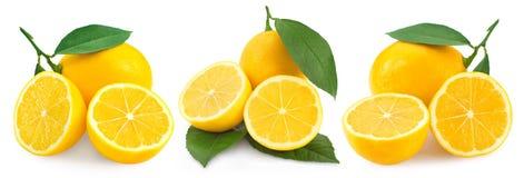 Citron på vit arkivbild
