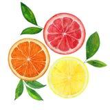 Citron, pamplemousse et orange Images libres de droits