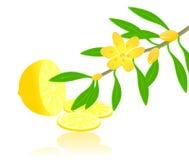 Citron paradise Royalty Free Stock Images