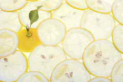 Citron Sicilien, citrus, filial, blad, guling, Royaltyfri Foto