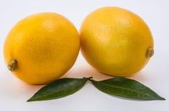 Citron två på vit bakgrund Arkivfoto