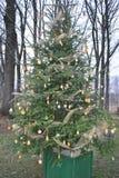 Citron unique et arbre de Noël orange de pin photos libres de droits