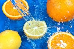 citronapelsiner Arkivfoto