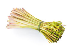 citronella illustrazione di stock