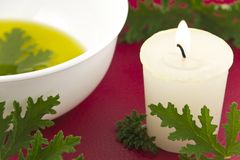 Citronella Candle. Citronella plant leaves with a citronella candle, no mosquitos stock photography