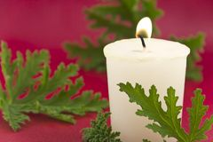 Citronella Candle. Citronella plant leaves with a citronella candle, no mosquitos royalty free stock image