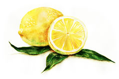 citroner royaltyfri illustrationer