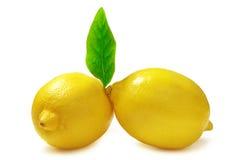 citroner Arkivbilder
