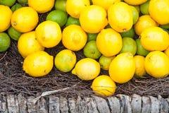Citroner i korg Royaltyfria Bilder