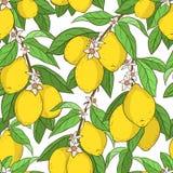 citroner mönsan seamless royaltyfri illustrationer