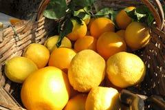 Citroner och apelsiner i en korg Arkivbild