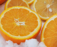 Citroner och apelsiner i snön Arkivbild