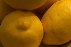 Citrons Photographie stock libre de droits