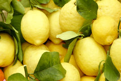 Citrons. Fresh citrons at Limone, Largo di Grda, Italy, Europe royalty free stock photography