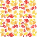 Citrons d'agrumes et modèle de pamplemousse Images stock