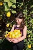 Citrons de cueillette Photographie stock libre de droits