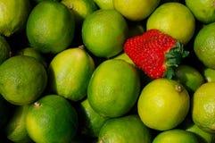 Citrons et une fraise Photographie stock libre de droits