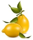 Citrons frais avec des lames. illustration de vecteur