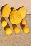 Citrons génétiquement modifiés de géant Images libres de droits