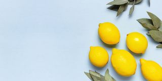 Citrons juteux m?rs, brindilles d'eucalyptus sur le fond bleu en pastel Fruit de citron, concept minimal d'agrume, vitamine C ?t? photographie stock