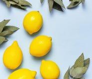 Citrons juteux m?rs, brindilles d'eucalyptus sur le fond bleu en pastel Fruit de citron, concept minimal d'agrume, vitamine C ?t? photographie stock libre de droits