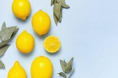 Citrons juteux m?rs, brindilles d'eucalyptus sur le fond bleu en pastel Fruit de citron, concept minimal d'agrume, vitamine C ?t? images libres de droits