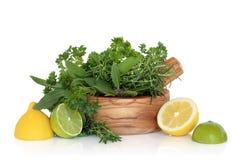Citrons, limettes et lames d'herbe Image stock