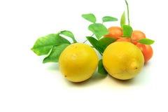 Citrons, oranges et limettes Photos stock