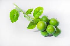 Citrons verts d'isolement sur le fond blanc Images libres de droits