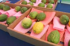 citrons visar judiskt Arkivfoto