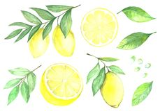 Citronsamling royaltyfri illustrationer