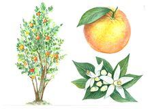 Citronsamling stock illustrationer