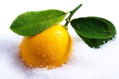 citronsnow royaltyfria bilder