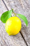Citronträbakgrund Arkivfoto