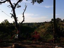 Citronträdgård och himmel fotografering för bildbyråer