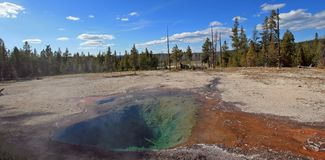 Citronvår på Firehole sjödrev i den Yellowstone nationalparken i Wyoming USA Royaltyfri Foto