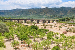 Citrous garden and bridge in dry riverbed Royalty Free Stock Photos