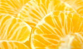 citrous plasterki Obraz Stock