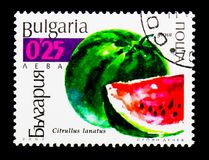 Citrullus lanatus, serie dell'anguria delle cucurbitacee, circa 2002 Fotografia Stock Libera da Diritti