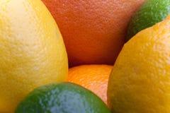 Citrus. A bunch of citrus fruits including lemons, limes, oranges, and grapefruit Stock Image
