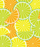 Citrus. Vector citrus slices of three types Royalty Free Stock Photography
