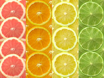 citrus Royaltyfri Bild