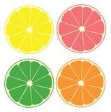citrus vektor illustrationer