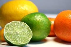 Citrus. Fresh citrus fruits: tangerine, kumquat, lemon, lime stock photography