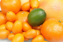 Citrus Royalty Free Stock Photos