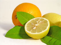 Citrus. Fruit Stock Image