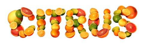 citrus stock de ilustración