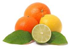 Citrus Royalty Free Stock Image