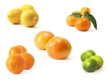 Citrus Stock Photos